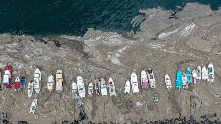 トルコで「海の鼻水」大量発生 住民に不安広がる